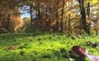 car-lesa-gozd