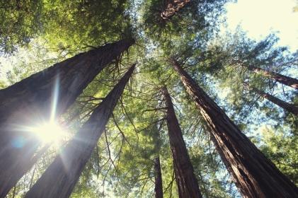 čar lesa